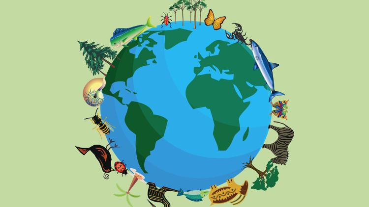 Comenzó COP15, una conferencia mundial de la ONU sobre la preservación de la naturaleza