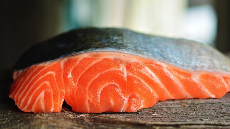 Argentina se convirtió en el primer país del mundo en prohibir la cría de salmones